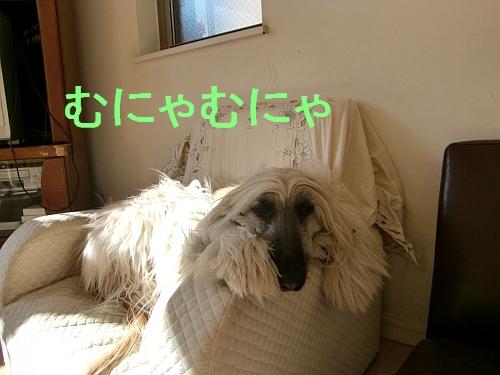 PO20101228_0006.jpg