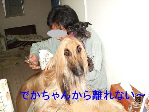 PO20110106_0003.jpg