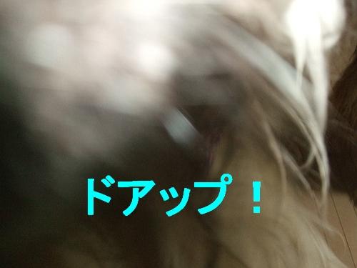 PO20110106_0034.jpg