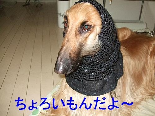 PO20110130_0002_1.jpg