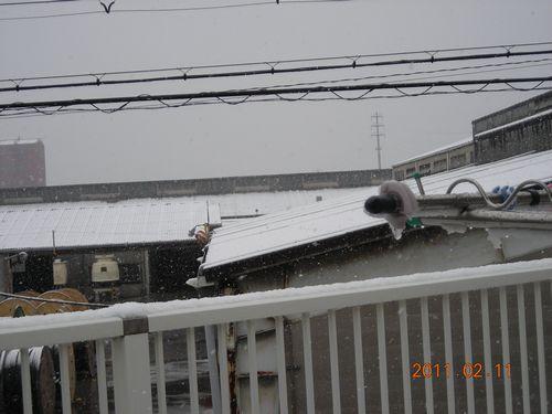 11.02.11雪の大阪 1