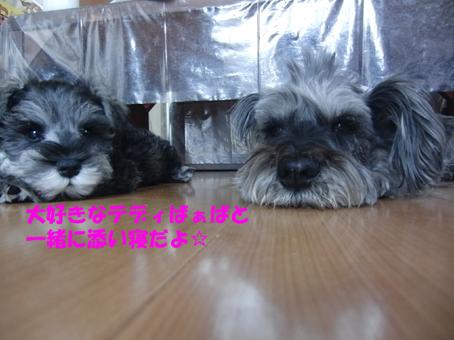 テディ&玄太1