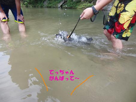 テディ初泳ぎ