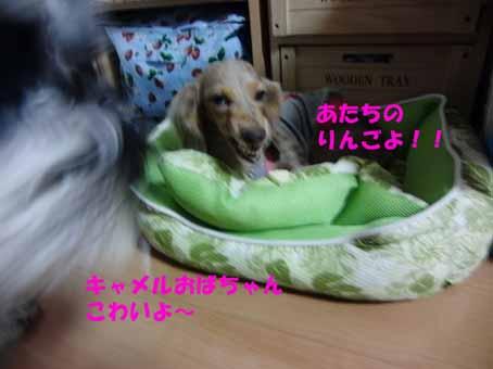 武蔵VSキャメル