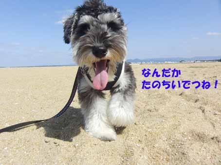 砂浜お散歩中