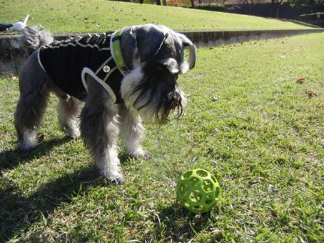 ボール投げて~