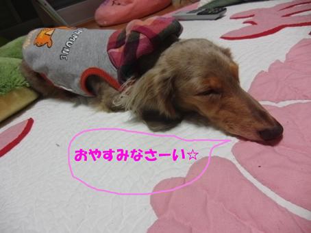 きゃんちゃんおやすみ~