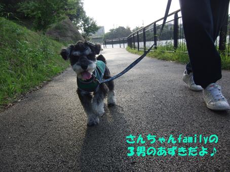 あずきと一緒にお散歩