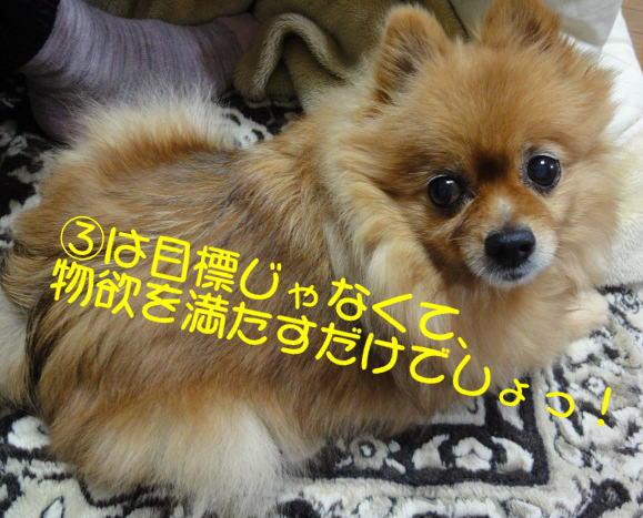 20120103chobi.jpg