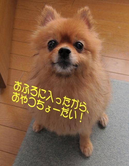 s-20111204chobi2.jpg