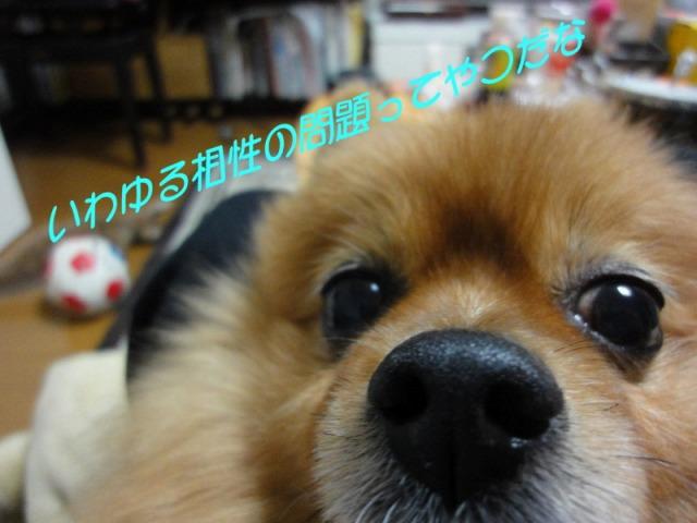 s-20111221chobi.jpg