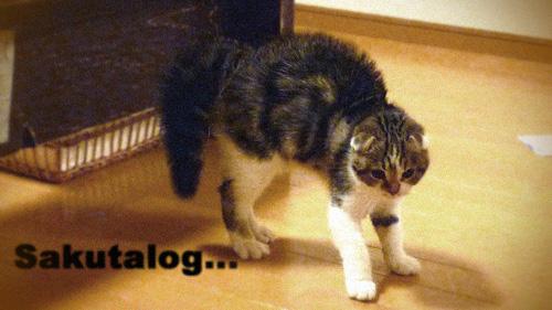 Sakutalog 猫と暮らすインテリア