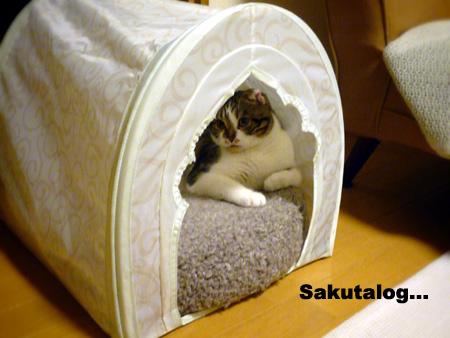 Sakutalog... 猫
