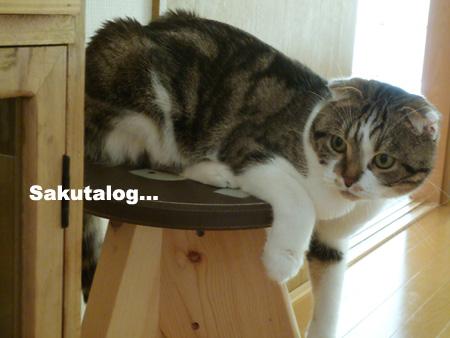 猫とスツール