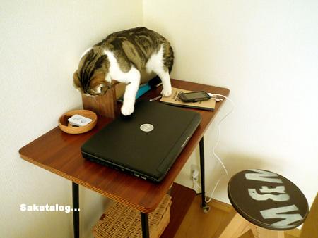 さくたろう 猫ブログ
