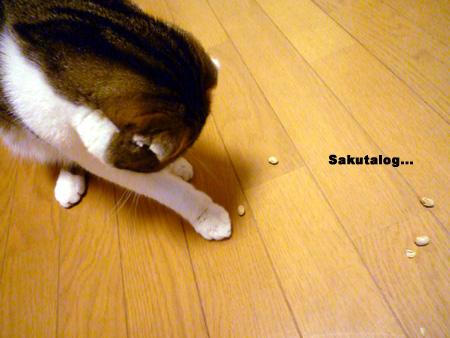 猫と豆まき