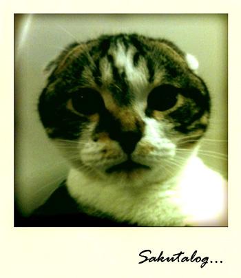 iPhone 猫写真