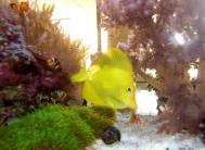 CIMG6551金魚