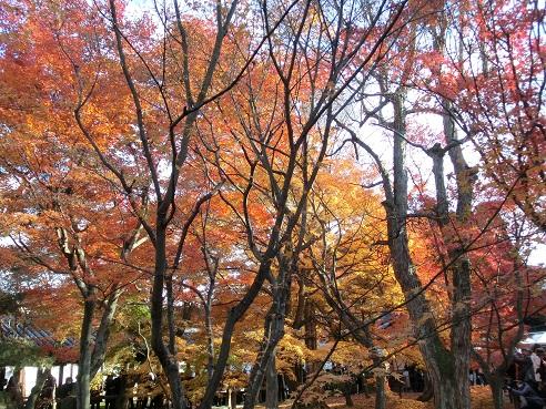 CIMG3378東福寺紅葉の庭を歩く