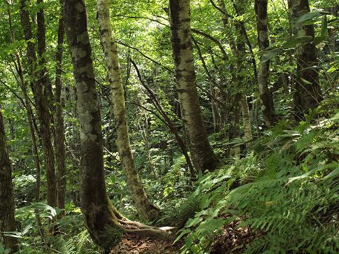 飛騨国有林 038