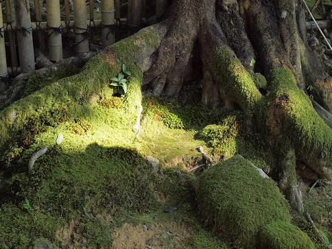 苔の庭 094