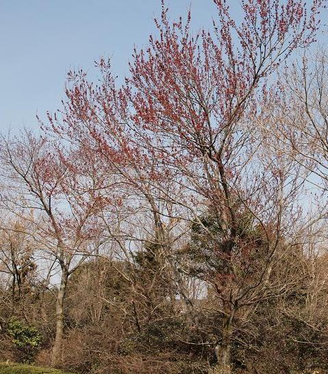 花の木 044