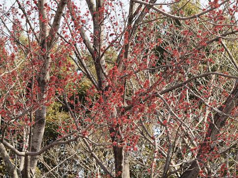 花の木 054