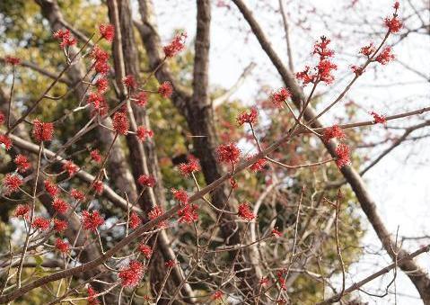 花の木 022