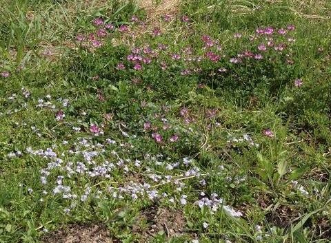 野の花 007