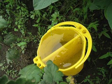 黄色のバケツ、雨が天敵?