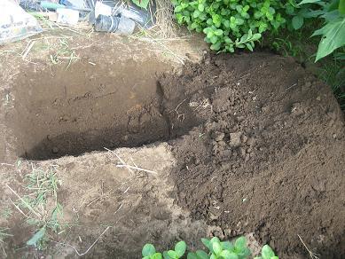 穴掘りー1