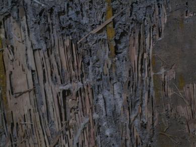 木が紙のよう。。。