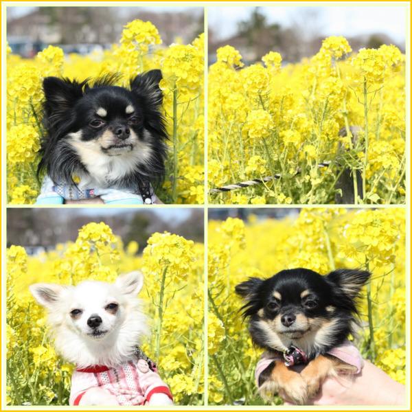 HAPPY☆SMILE-公園10