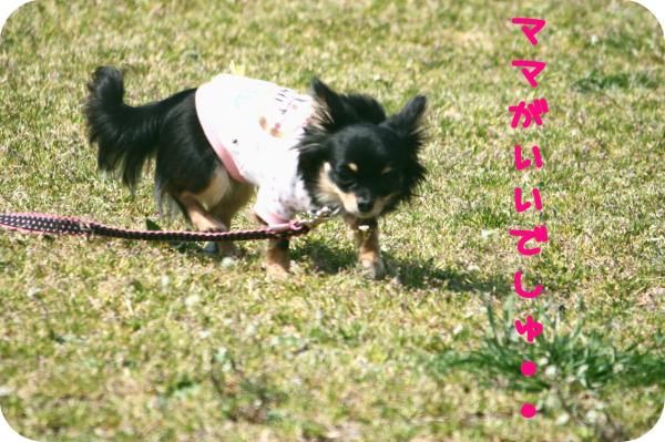 HAPPY☆SMILE-公園5