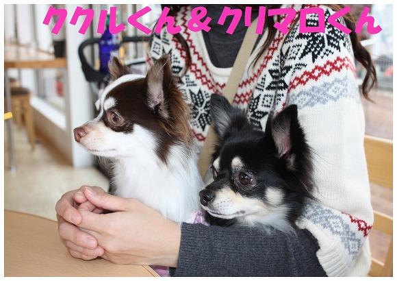 ★チワワン☆ハウス★-ラン4