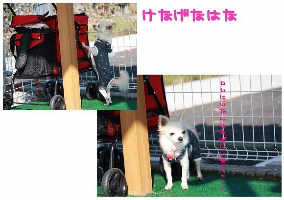 ★チワワン☆ハウス★-ラン2