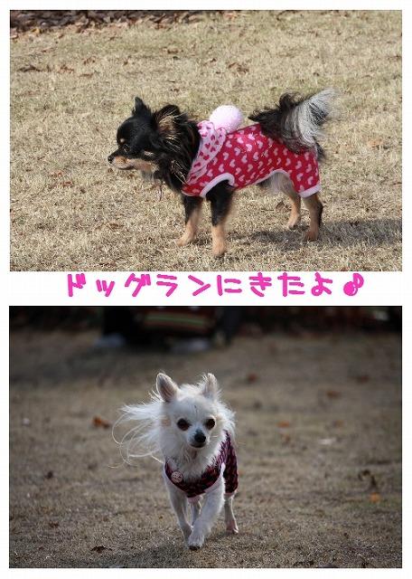 ★チワワン☆ハウス★-ran