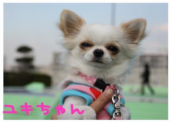 ★チワワン☆ハウス★-ららぽ4