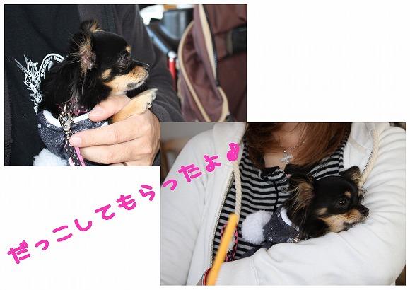 ★チワワン☆ハウス★-ラン14