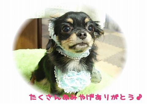 ★チワワン☆ハウス★-マロン