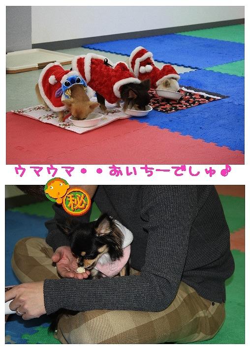 ★チワワン☆ハウス★-misato21