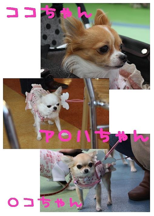 ★チワワン☆ハウス★-ららぽ1