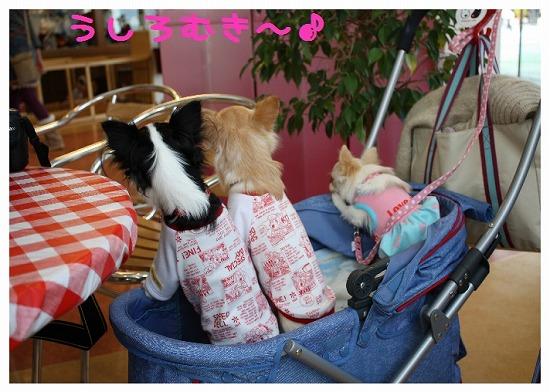 ★チワワン☆ハウス★-ららぽ9