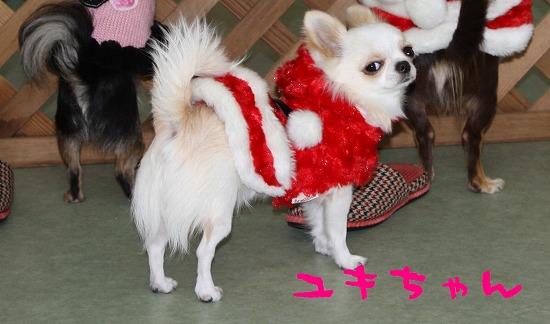 ★チワワン☆ハウス★-misato1