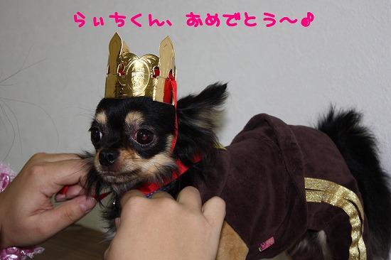 ★チワワン☆ハウス★-miato13
