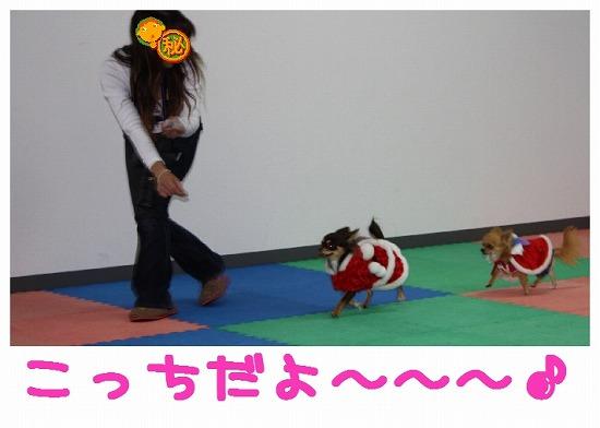 ★チワワン☆ハウス★-misato24