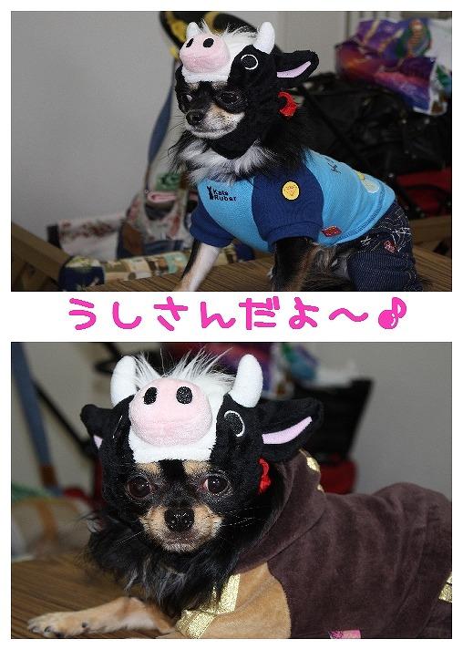 ★チワワン☆ハウス★-misato27