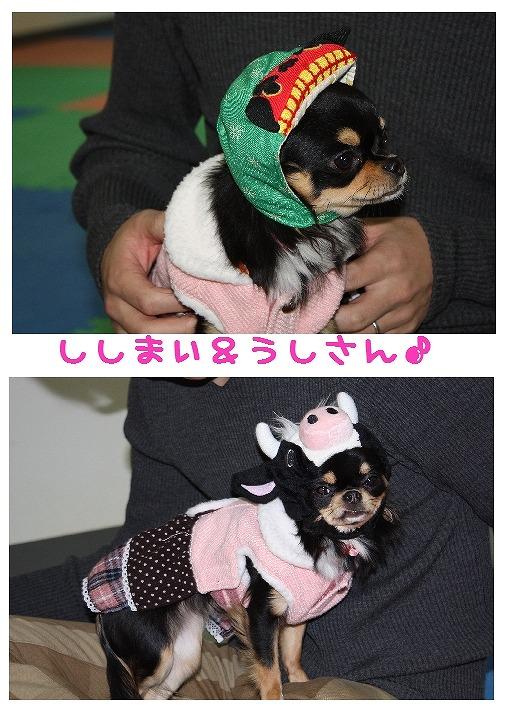 ★チワワン☆ハウス★-misato29