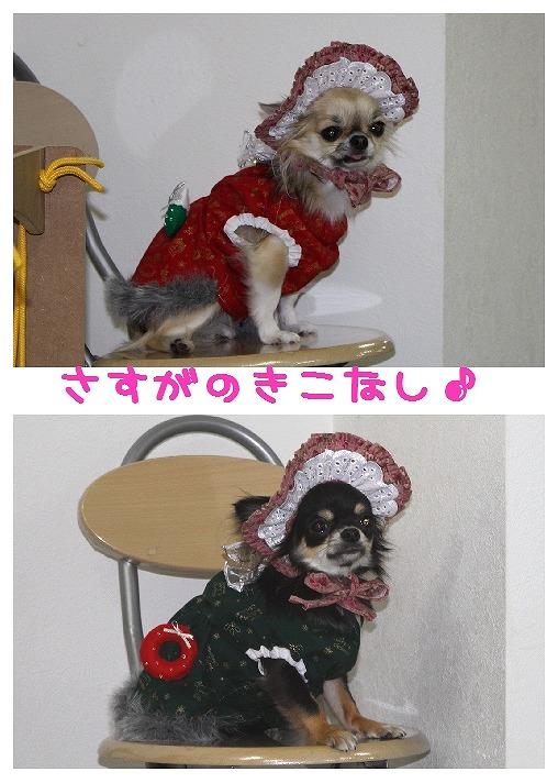 ★チワワン☆ハウス★-misato32