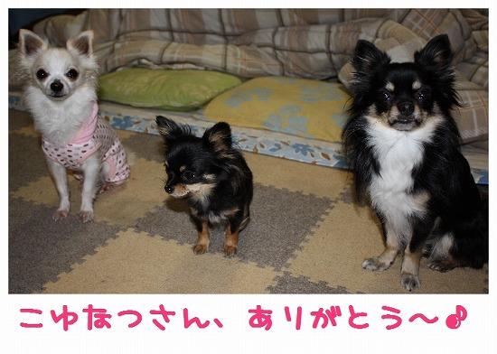 ★チワワン☆ハウス★-プレゼント4